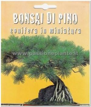 Semi bonsai di pino passione piante vivaio online for Vendita bonsai on line