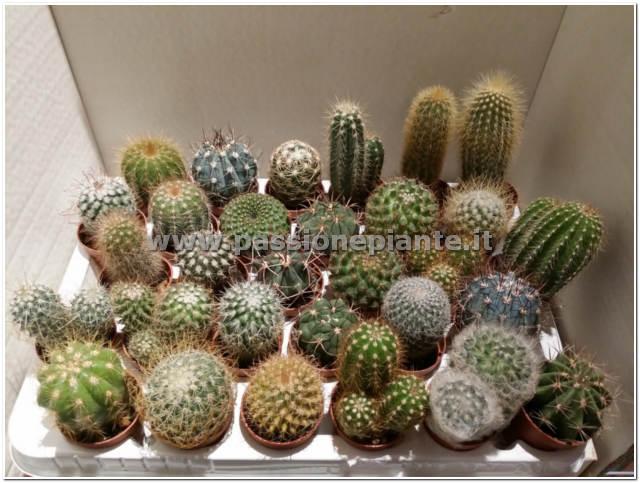 Offerta mix 5 piante grasse passione piante vivaio online for Piante on line