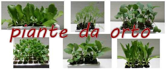 Passione piante vivaio online vendita piante da interno for Piante da orto vendita online
